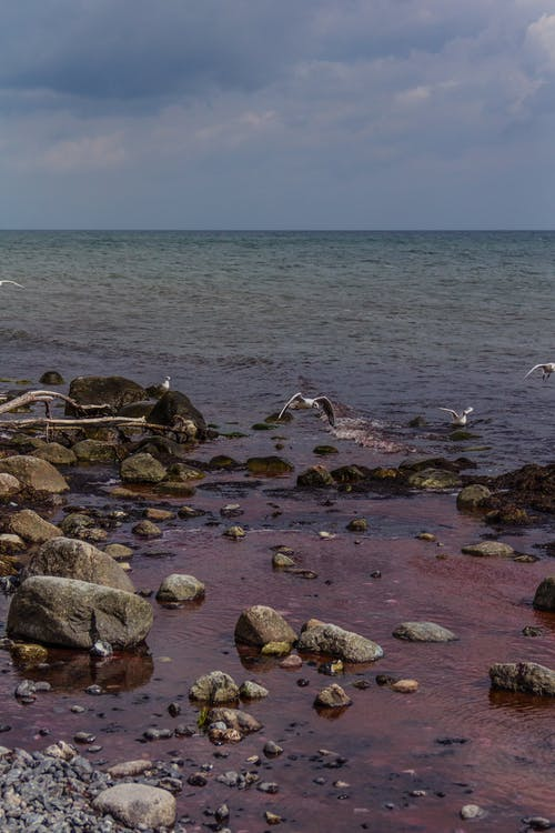 Foto profissional grátis de água vermelha, Dinamarca, gaivotas, mons klint