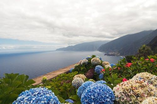 Безкоштовне стокове фото на тему «квіти, краєвид»