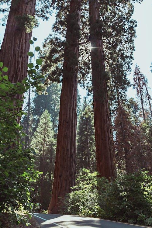 Foto profissional grátis de árvores, árvores grandes, Estados Unidos, EUA