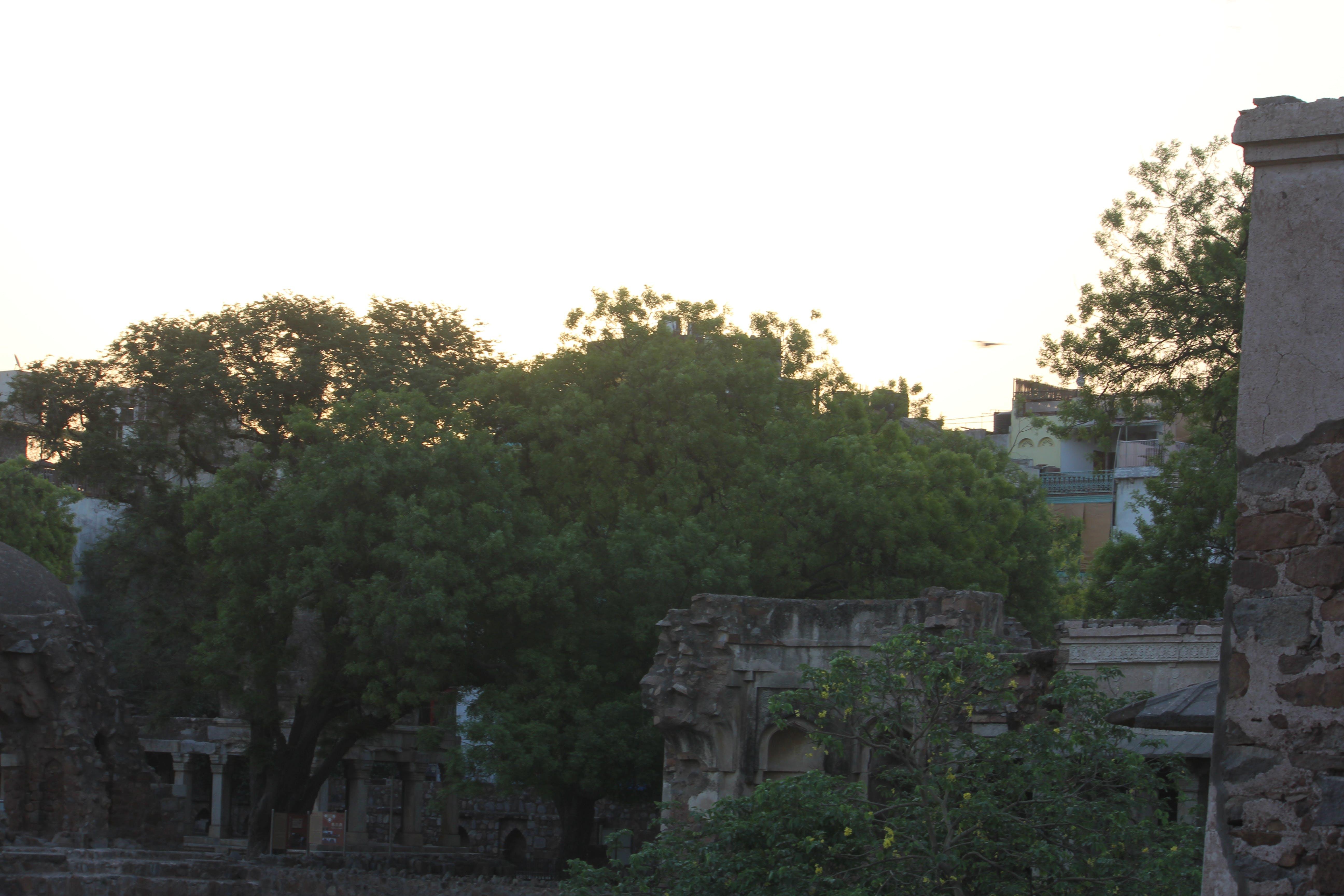 Free stock photo of background image, tree