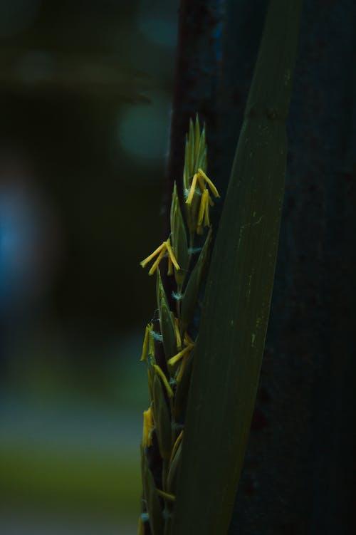 Бесплатное стоковое фото с былинка, трава, травинки