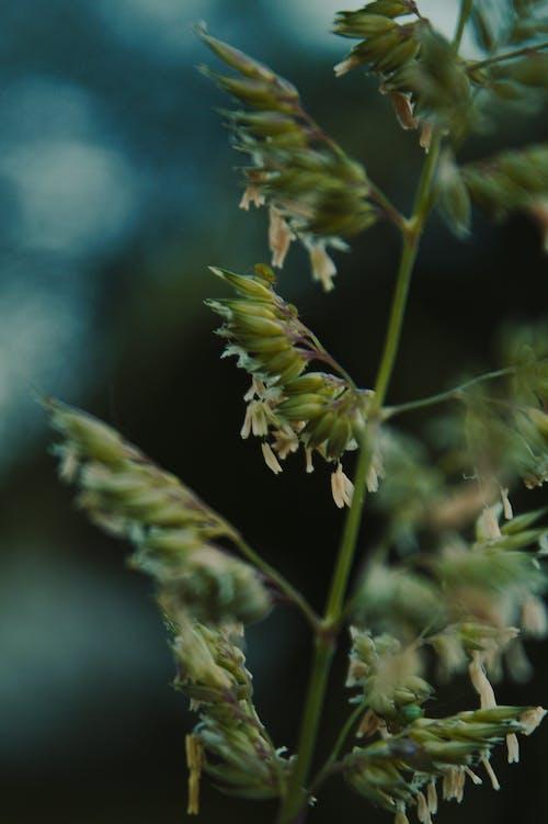Бесплатное стоковое фото с былинка, зеленая трава, трава, травинки