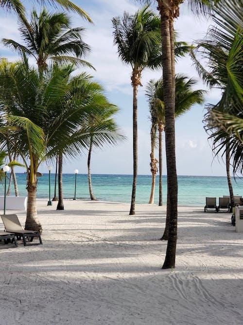 Sunloungers Near Coconut Trees on Seashore