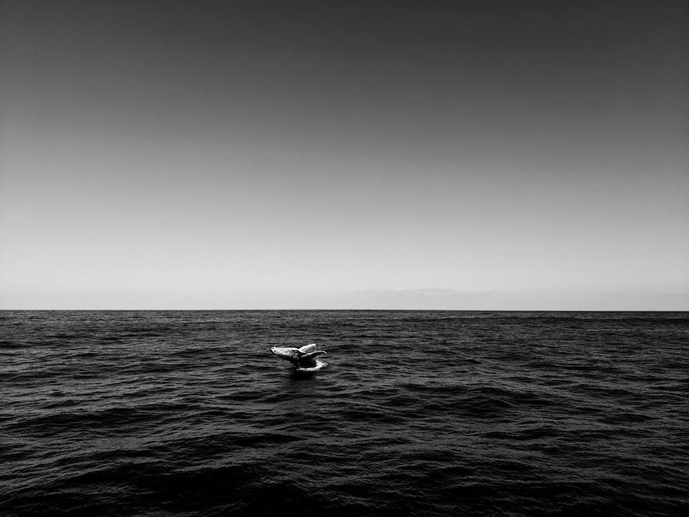 Австралия, вода, волны