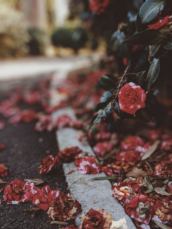 กลางแจ้ง, กลีบดอก, กลีบดอกไม้