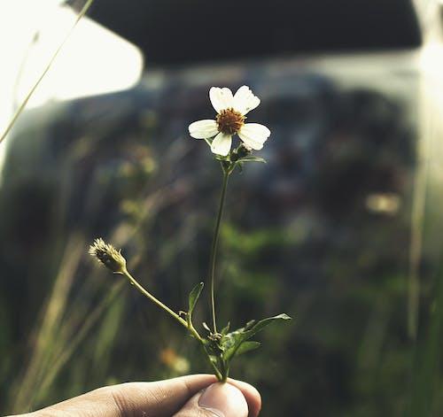 天性, 白色的花, 花 的 免费素材照片