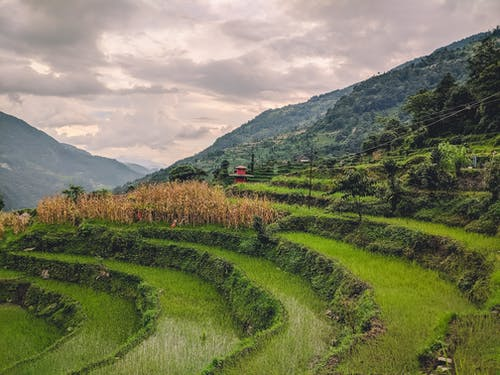 Free stock photo of farm, ghandruk, himalayas, mountains