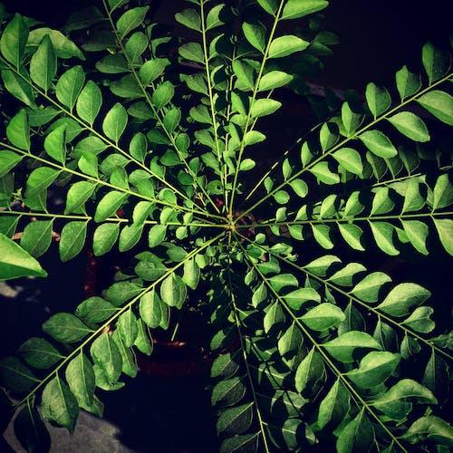 Free stock photo of houseplants, india, mothernature