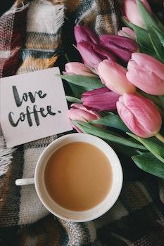 Free stock photo of coffee, flowers, purple, writing