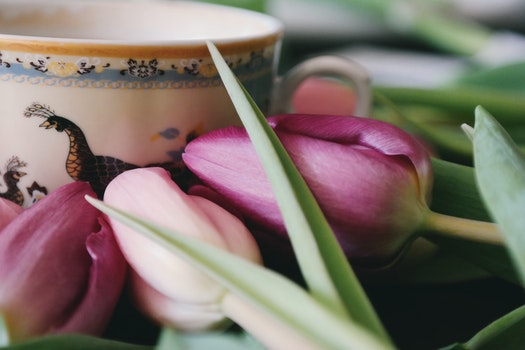 Free stock photo of coffee, cup, flowers, purple