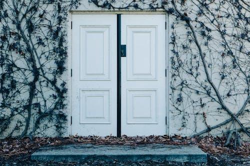 エントランス, ツタ, ドア, 乾いた葉の無料の写真素材