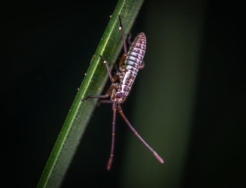 Immagine gratuita di insetto, macro