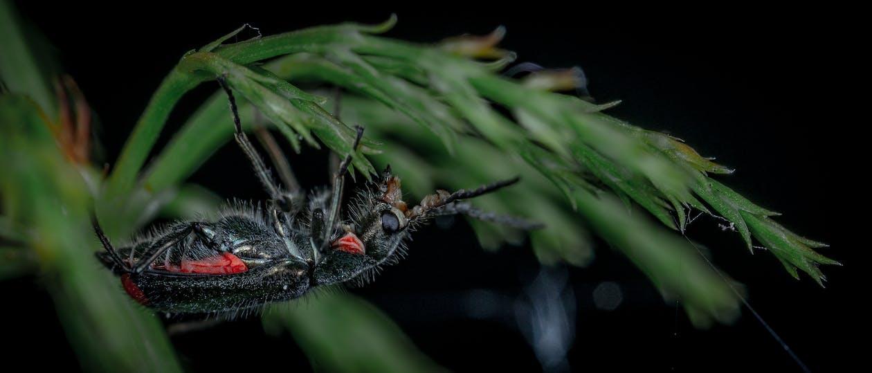 insekt, makro