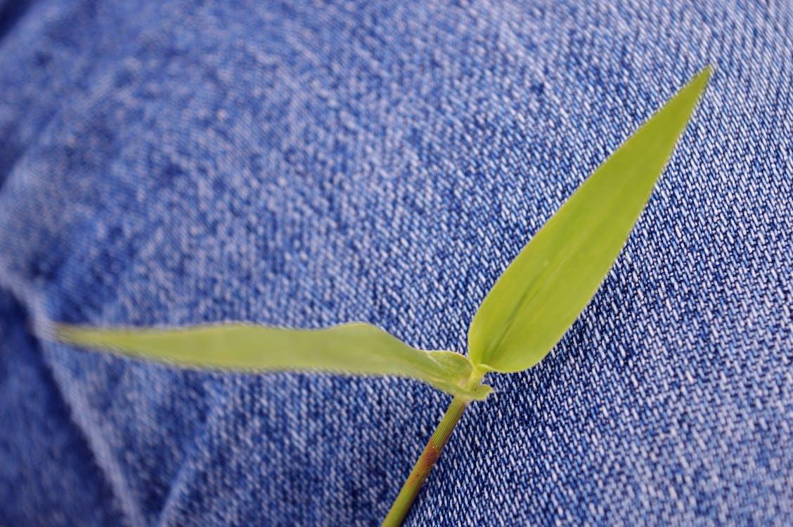 Free stock photo of denim, green, green grass