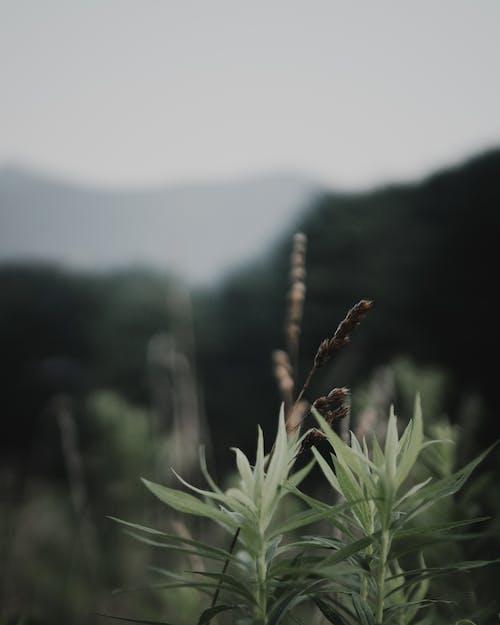 乾草, 山, 日落, 田 的 免費圖庫相片