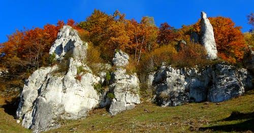 Základová fotografie zdarma na téma podzimní barvy, přírodní krása