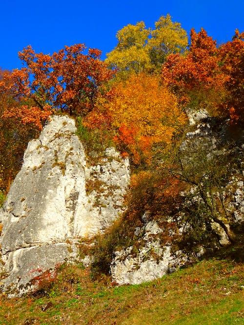 Základová fotografie zdarma na téma podzim, přírodní krása