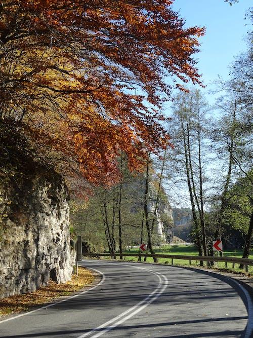 Základová fotografie zdarma na téma podzim, silniční asfalt