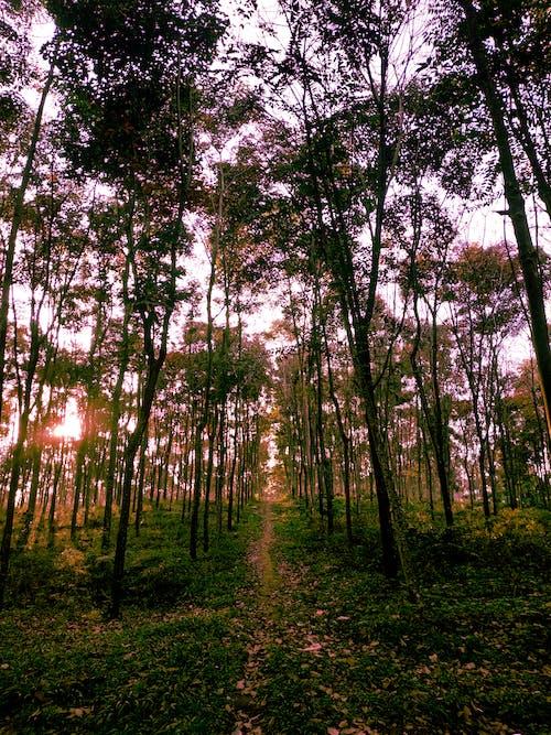 Gratis lagerfoto af landskab, landskabsfotografering, nopeople, skov