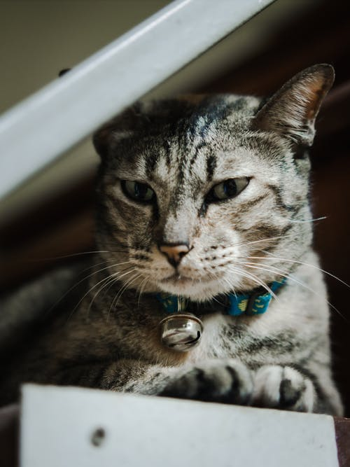 Kostenloses Stock Foto zu autoscheinwerfer, katze, katzenfamilie