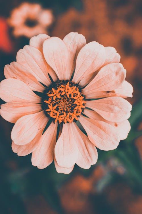 Ingyenes stockfotó élénk színek, gyönyörű virág, közeli, közelről virág témában