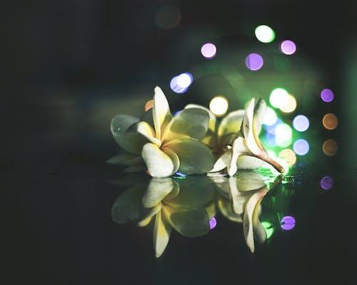Free stock photo of beautiful flower, bokeh, dark, flowers