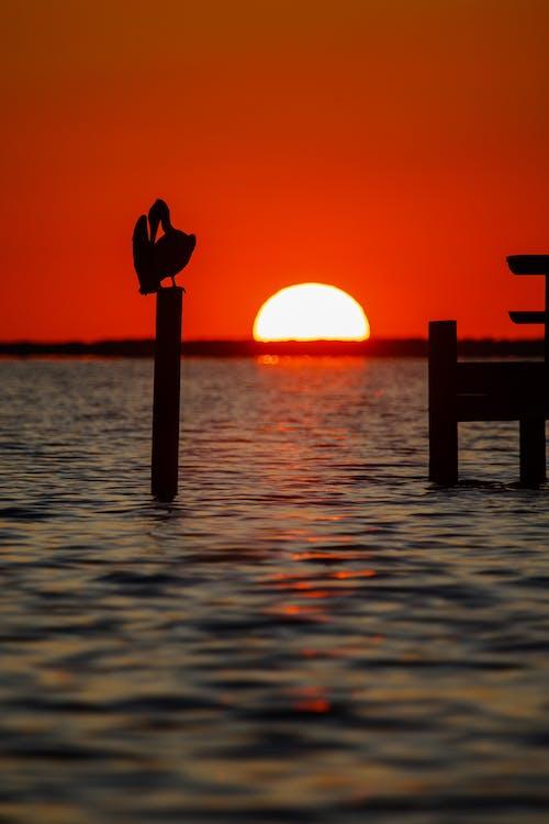 天性, 日落, 海, 海岸 的 免費圖庫相片