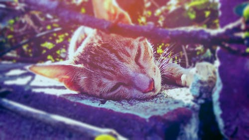 Brown Tabby Cat Lying on Ground