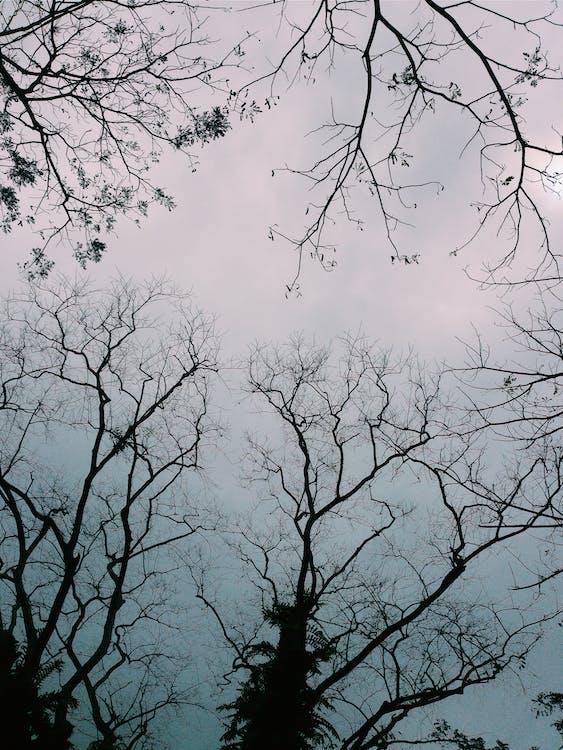 Kostenloses Stock Foto zu launisch, natur, schönheit in der natur