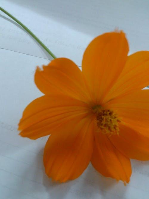Foto profissional grátis de beleza na natureza, flor, laranja