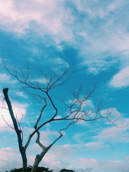 Foto profissional grátis de árvore, azul, beleza na natureza