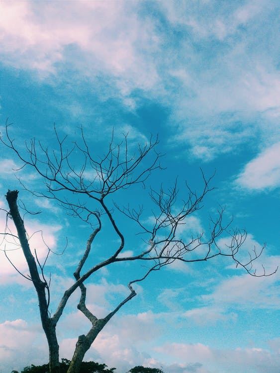 Free stock photo of beauty in nature, blue, blue sky