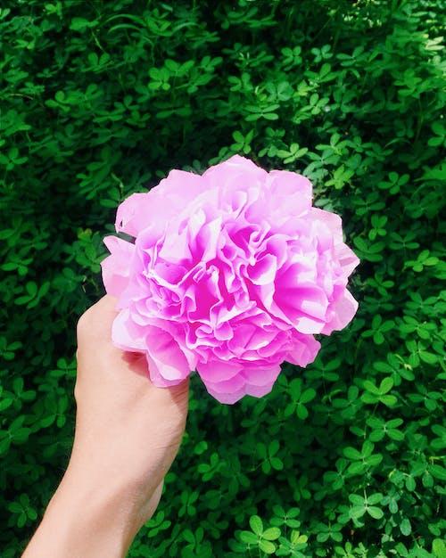 Foto profissional grátis de beleza na natureza, cor-de-rosa, ecológico