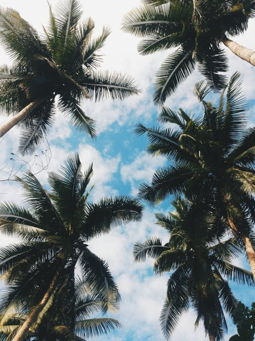 Kostnadsfri bild av kokospalmer, lågvinkelfoto, lågvinkelfotografi, Palmblad