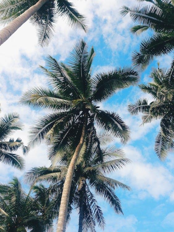 ağaçlar, doğa, doğa arka plan içeren Ücretsiz stok fotoğraf