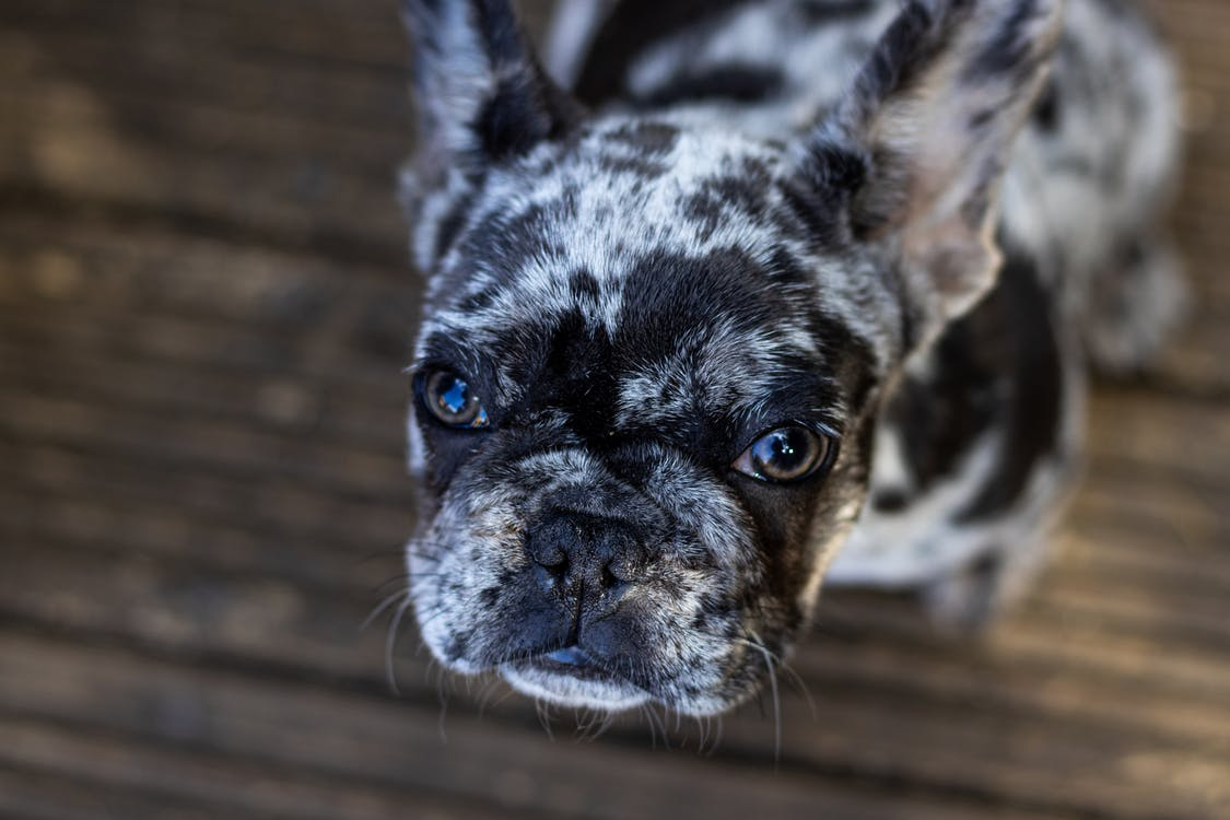 Selective Focus Photography Of Short  Coated Dog