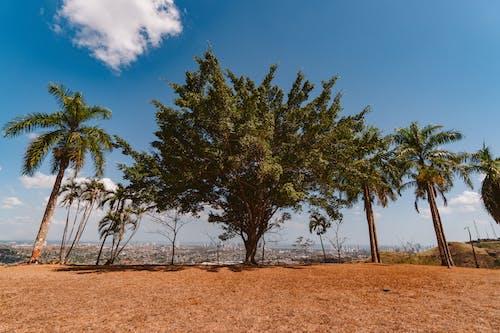 Foto d'estoc gratuïta de a l'aire lliure, arbres, brillant, cel