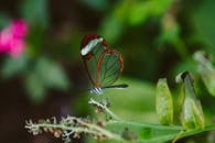 Macro Photography of Dragonfly on Plant