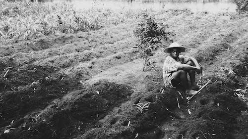 คลังภาพถ่ายฟรี ของ กลางวัน, กลางแจ้ง, การถ่ายภาพ, การทำฟาร์ม