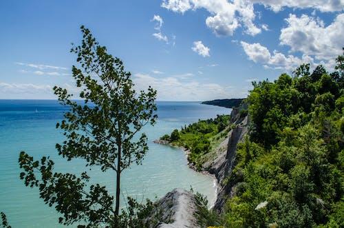 Бесплатное стоковое фото с дерево, канада, край скалы, красивый вид