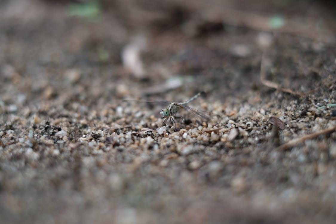 animal, fly, soil