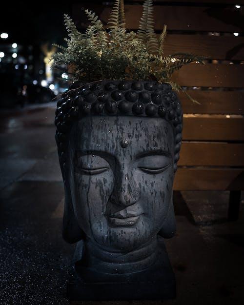 Darmowe zdjęcie z galerii z budda, ciemny, głowa, liście paproci