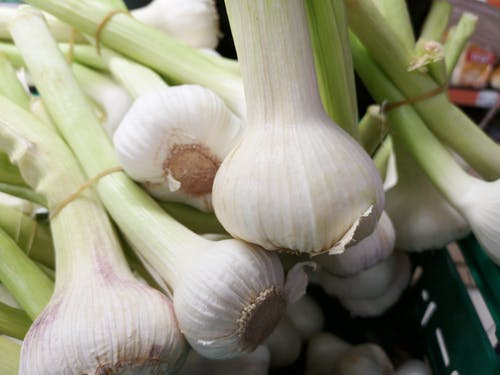 Photo of White Garlic Bulbs