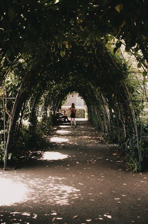 Immagine gratuita di all'aperto, ambiente, camminando, crescita