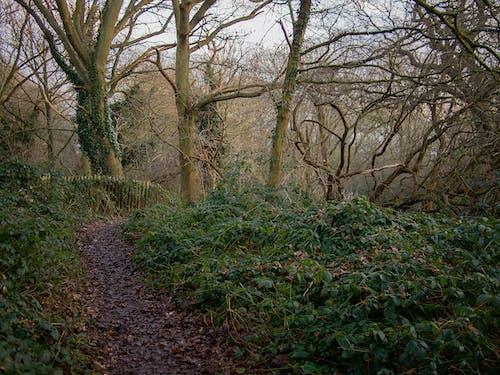 Immagine gratuita di alberi, foresta, percorso, sottobosco