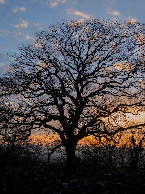 Immagine gratuita di albero, cielo, colorato, leggero