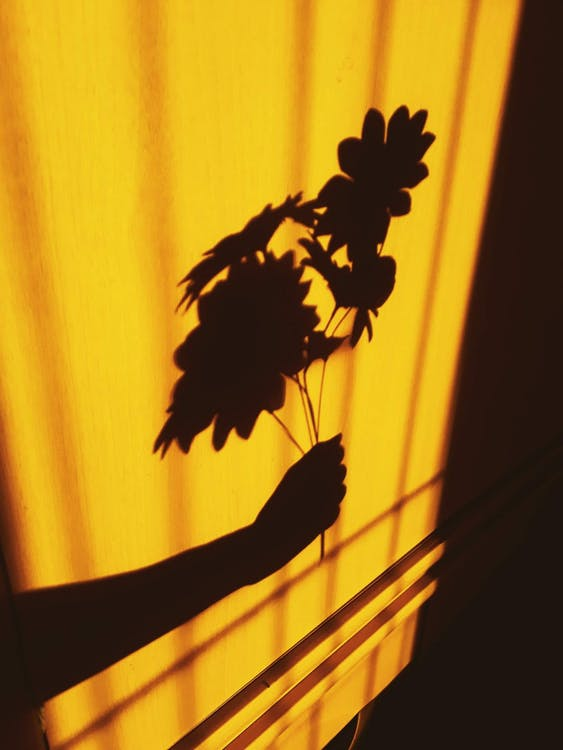 Photo of Person's Shadow Holding a Flowers