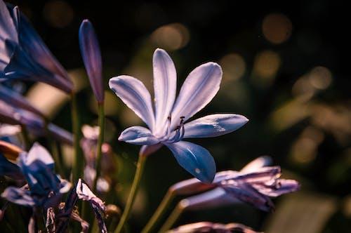 Free stock photo of close up, flower, nature, purple