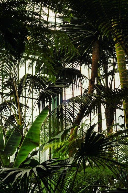Groene Palmbomen En Bananenplanten