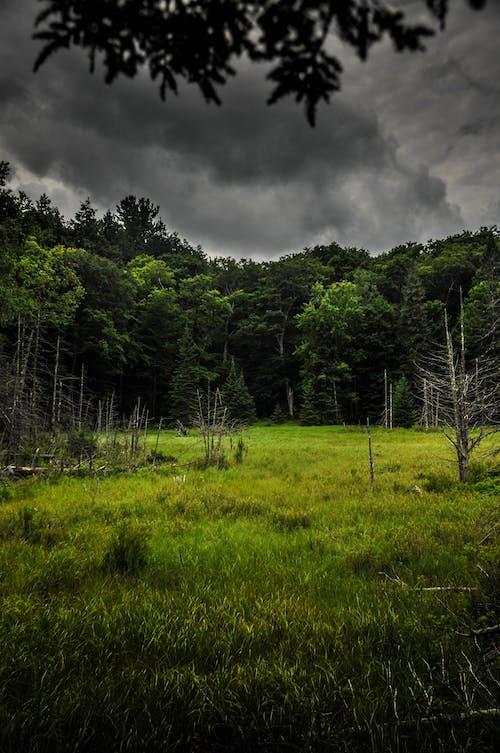Free stock photo of dark, dark clouds, forrest, gloomy